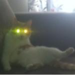 Mariam's cat